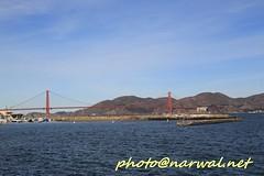 Fleet Week SF 2016 (Narwal) Tags: sfo sanfrancisco california ca us usa    marina district fleet week sf 2016  golden gate bridge