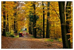 5D-8583-1250 (ac | photo) Tags: autumn trees light people fall nature colors leaves yellow landscape fallcolors