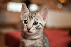 141122_kittens-64.jpg (Weedobooty) Tags: cats kittens