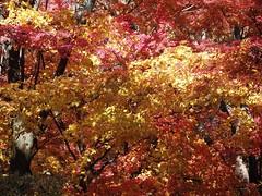 SEOUL TREES (patrick555666751 THANKS FOR 5 000 000 VIEWS) Tags: seoul trees south korea coree du sud asie asia arbres arboles east corea del coreia do sul zuid sur patrick roger patrickroger patrick555666751 patrick55566675