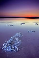 --------- (natalia martinez) Tags: azul atardecer agua lila sal