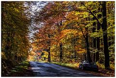600D-5950-Auto (ac | photo) Tags: autumn trees light fall nature colors leaves car landscape fallcolors bmw z4 bmwz4