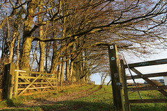 Up & away (GarethA) Tags: light tree sunrise landscape gate dorset