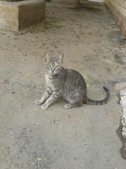 Cats (hsam_32) Tags: cats pets love animals cat homeless egypt kitty kittens cairo egyptianmau homelesscats