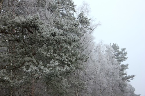 "Im Winterwald mit Schnee 2015 • <a style=""font-size:0.8em;"" href=""http://www.flickr.com/photos/69570948@N04/15718356834/"" target=""_blank"">View on Flickr</a>"