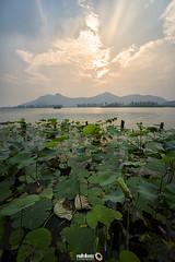 Sleepy Xianghu (Xiaoshan) (Andy Brandl (PhotonMix.com)) Tags: china sky lake mountains nature vertical clouds landscape nikon lotus serene tranquil d800 zhejiang xiaoshan xianghu photonmix