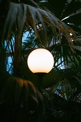 Park Lamp (Garret Voight) Tags: flowers light plants como nature lamp leaves minnesota night garden palms conservatory saintpaul marjoriemcneely