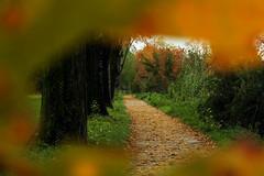 Resti (Ylis7) Tags: autumn foglie canon landscape colore natura lucca erba tuscany foglia toscana autunno colori garfagnana bellezza bosco foresta canonfoto ylis fotoautunno