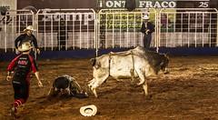 Segura Peo (muriloribas) Tags: brazil paran brasil bull rodeo sul boi rodeio 2014 jacarezinho competio segurapeo fetexas fotomuriloribas iinteiror