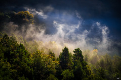 Herbstnebel (*altglas*) Tags: morning autumn mist fog forest nebel herbst wald morgen pfalz südpfalz wasgau bärenbrunnertal