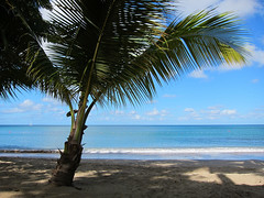 Palm Beach by Heaven`s Gate (John) (saintluciatourism) Tags: ocean sea west beach water saint flickr paradise view azure palm lucia caribbean stlucia tranquil indies johndalkin heavensgatejohn eastwindsinn ifttt musictomyeyeslevel1
