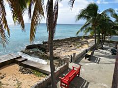 IMG_2568_fix (goatling) Tags: island tropical tropic caribbean cayman carib caymanislands tropics coconuttrees grandcayman caribe westbay westindies britishwestindies 201411gcm gcm201411