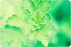 Green green green (Dóra B.) Tags: summer green leaf day sommer sumar náttúra garður fallegt dorabirgis