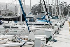 Masts, Marina, San Francisco (Sharon Mollerus) Tags: sanfrancisco california marina boats unitedstates manmade subject yachts 20140928img6900csfcr2