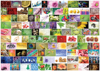 100x Macros Mosaic 2014