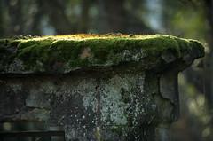 Vieilles pierres (Samuel Raison) Tags: horse cheval nikon loire nikond3 loire42 nikon2870200mmafsvr