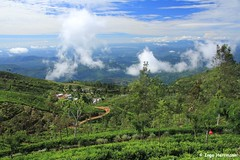 IMG_4233 (Herrmaennchen) Tags: travel sky green clouds canon landscape highlands asia asien view tea sigma srilanka teaplantation reise haputale