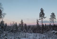 Lumière hivernale (sosivov) Tags: winter white snow forest landscape sweden