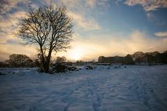 Sun going down.. (kokeshidol) Tags: christmas sunset snow tree nikon footprints d750 holmfirth