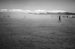 Oregon beach (sparth) Tags: leica blackandwhite bw beach silhouette oregon blackwhite noiretblanc nb minimalism plage noirblanc 2014 xvario leicaxvario