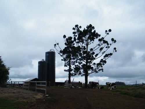 Farmview Silos n Trees