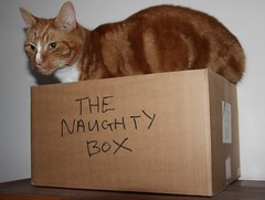 Naughty Freddie (Stuart Axe) Tags: pet cats pets cat ginger box tabby kitty charlie freddie marmalade polydactyl polydactylcat tomcat gingercat tabbycat marmaladecat gingertom petportraits polydactyly catsandboxes hemingwaycat kissablekat bestofcats gingertomcat catmoments charlieandfreddie friendsofzeusphoebe thenaughtybox