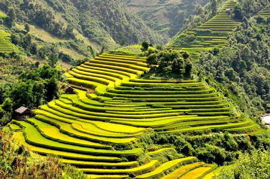Ruong-bac-thang-Mu-Cang-Chai_3