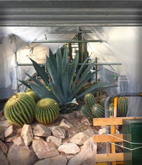 "CactusRest • <a style=""font-size:0.8em;"" href=""http://www.flickr.com/photos/130463794@N02/16319975626/"" target=""_blank"">View on Flickr</a>"