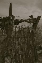 After The Hard Harvest (MPnormaleye) Tags: arizona bw southwest monochrome blackwhite sticks farm pasture utata grayscale shelter twigs ramada cholla deset