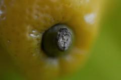 Macro Citrus (saddy_85) Tags: light macro up yellow fruit lemon nikon close box citrus d5100