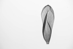 Petal - Mono (@Dave) Tags: flower detail macro eye butterfly for nikon petal micro nikkor attention 52 2016 d600