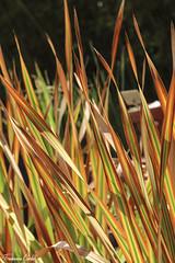(atrialbyfire) Tags: orto ortobotanico botanica napoli naples plants piante pianta fiore flowers flower colorful colors nature natura colori colore palme palma bocciolo lumaca erba naturale naturalistic green