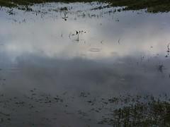 piove sul bagnato (conteluigi66) Tags: reflections nuvole ombra luce specchio cerchi riflesso gocce pozza autofocus pozzanghera