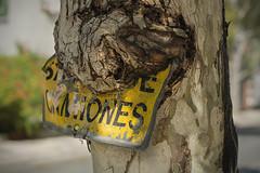 SALIDA DE CAMIONES 2/3 (- Cajn de sastre -) Tags: danger decay urbandecay lodefotos 52in2016challenge