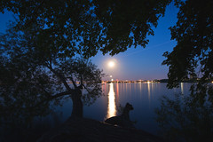 142/366 (local paparazzi (isthmusportrait.com)) Tags: longexposure blue trees shadow moon lake water skyline buildings iso800 pod glare little zoom branches tripod grain luna fullmoon capitol moonrise short dome flare bluehour 20mm madisonwi noise liquid f11 lunar starburst nessie slowshutterspeed lakemendota 2016 picnicpoint catchycolorsblue theedgewaterhotel danecountywisconsin 366project canon5dmarkii localpaparazzi redskyrocketman lopaps lochnessmoster tokina1628f28 isthmusportrait