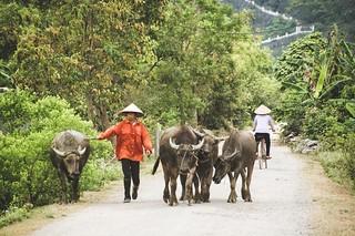 tam coc - vietnam 33