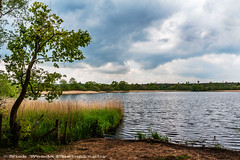 Frensham_DSC5661 (Nick Woods Photography) Tags: trees cloud nature water leaves clouds landscape pond cloudy nt surrey greenery nationaltrust rushes cloudysky waterscape pondscene waterscene frensham frenshamlittlepond frenshamponds frenshamcommon