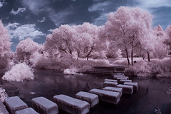 Path to the Surreal (johnsteelephoto) Tags: infrared infraredphotography ir surreal trees tancheon seoul seoullandscape
