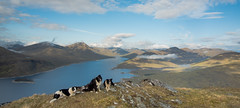 Life as a Collie (JJFET) Tags: dog mountains dogs collie sheepdog border loch collies knoydart quoich