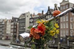 (nuriapase) Tags: city flowers flores holland primavera colors beautiful amsterdam bike spring colours details bicicleta holanda tunning detalles ciutat flors detalls bicicletes tunejar