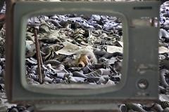 23/52 (2016): Seasons in the Abyss. Pripyat. (Sean Hartwell Photography) Tags: school television tv doll head decay destruction radiation nuclear screen ukraine disaster gasmask slayer easterneurope sovietunion ussr cccp chernobyl pripyat 30yearanniversary seasonsintheabyss