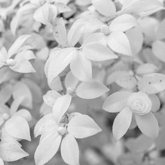 November Leaves (Mabry Campbell) Tags: november blackandwhite usa white nature leaves photography 50mm photo dallas texas photographer image unitedstatesofamerica fav20 photograph 400 infrared f28 squarecrop fineartphotography 2014 2015 commercialphotography fav10 720nm intimatelandscape ef50mmf12lusm fineartphotographer houstonphotographer sec mabrycampbell november152014 20141115img7767