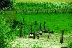 FA_003 (Dutch_Chewbacca) Tags: nature netherlands spring fort sunny dijk brabant 1877 landschap 1880 waterlinie nieuwe 1847 altena brabants hollandse uppel gantel uppelse schanswiel