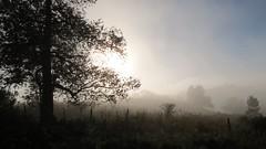 neblina (jakza - Jaque Zattera) Tags: suavidade neblina contraluz cerrao rvore