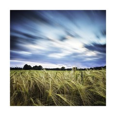 Barley (ben_wtrs79) Tags: field barley long exposure 10 olympus stop 28 omd em1 1240