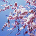 Beautiful blossom - part 2