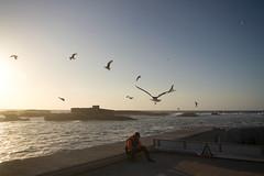 Morocco (fredcan) Tags: ocean street travel sunset sea seagulls man birds port island rocks sitting harbour morocco maroc maghreb oldtown atlanticocean essaouira contrejour moroccan mogador northernafrica fredcan
