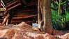 Gatinho observador (kmosai) Tags: cat cats gatos gato branco sun sunset tree gatobranco