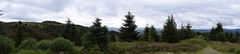 Queen Elizabeth park, Aberfoyle (WarmYeti) Tags: scotland landscape 360 panoramic trees wild walk tree sky outdoors outside plants green forrest hills mountain queenelizabethpark aberfoyle