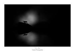 Reflet d'une face cache (Naska Photographie) Tags: naska photographie photo photographe paysage proxy proxyphoto macro macrophotographie macrophoto mouche insectes extrieur nature nuit dark darkness eau water reflet extincteur